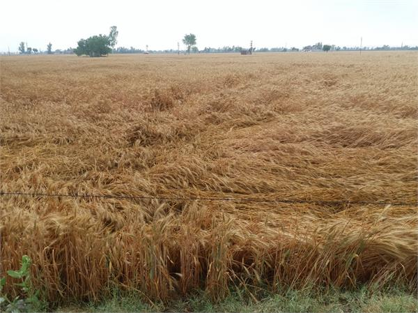 rains also bring sorrow for our food growers