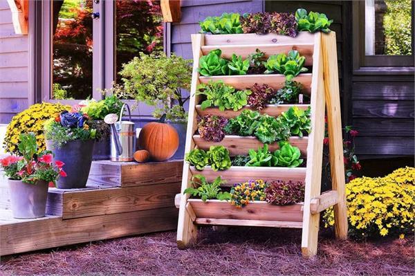 गर्मी में भी किचन गार्डन बनाने के हैं 6 फायदे