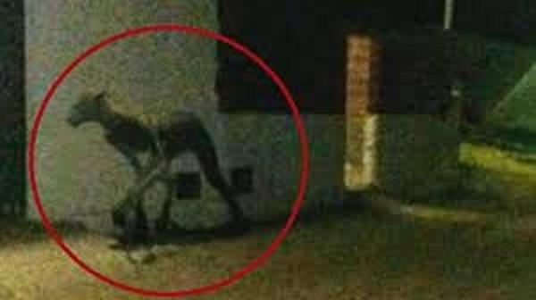 people terrified of mysterious 7 foot creature spotted roaming the streets