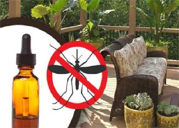 मच्छरों को घर से बाहर निकाल मारेंगे ये कमाल के नुस्खे