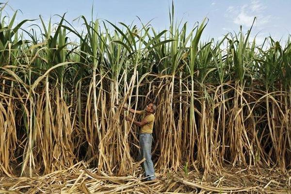 paswan asked states to ensure payment of sugar cane arrears of farmers