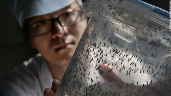 china s  mosquito factory  fighting zika and dengue
