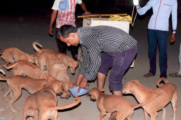 every dog in this village is millionaire