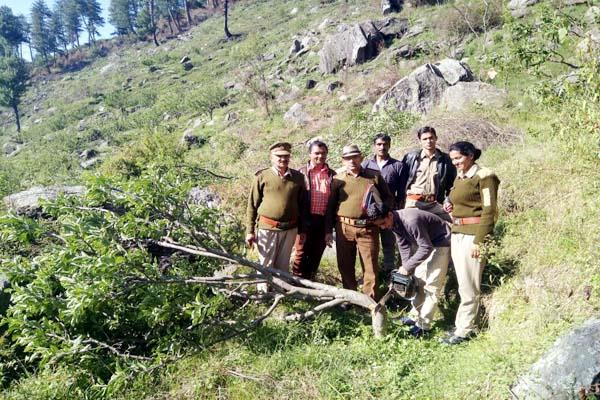 illegal occupation removed from forest land