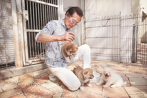 increasing demand of japanese dogs of akita breed overseas