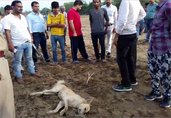 administration started the campaign to restrain the man eating dogs