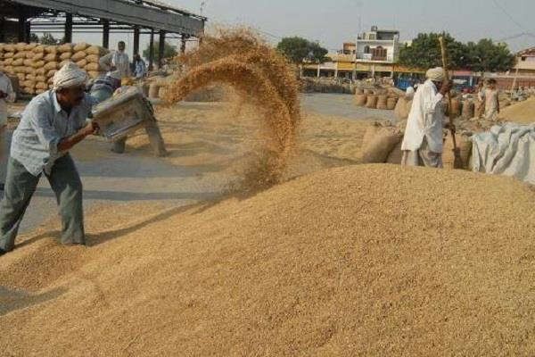 purchase of 12 04 lakh tonnes of wheat in punjab mandis