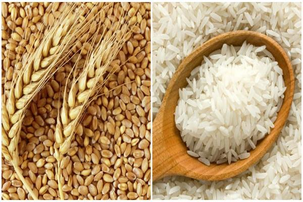us told wto india is breaking the limit of subsidy on wheat rice