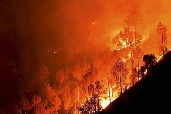 the loss to the country by fire in forests