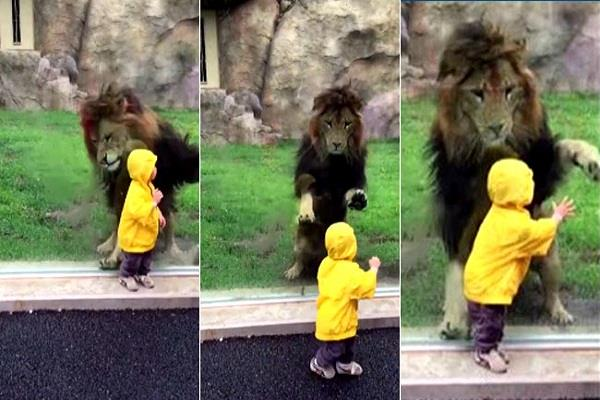 viral video chiba zoological park