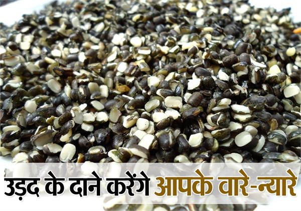 astrology upay of urad grain