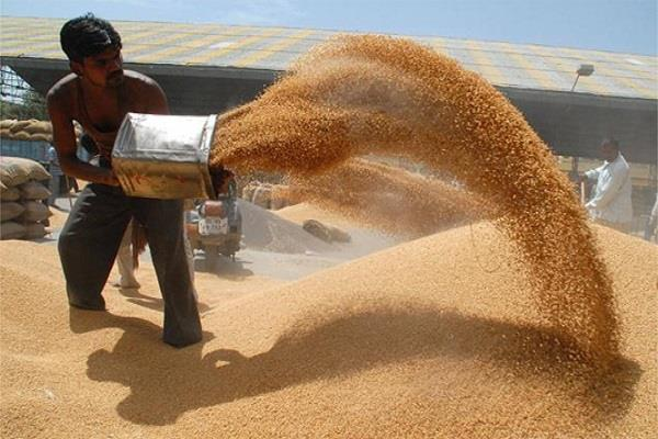 record breaking wheat procurement in punjab haryana complete 88 percent target