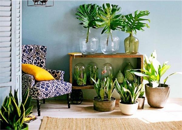 विश्व पर्यावरण दिवस: घर के आस-पास लगाएं ये पौधे, मिलेगा दोगुना फायदा
