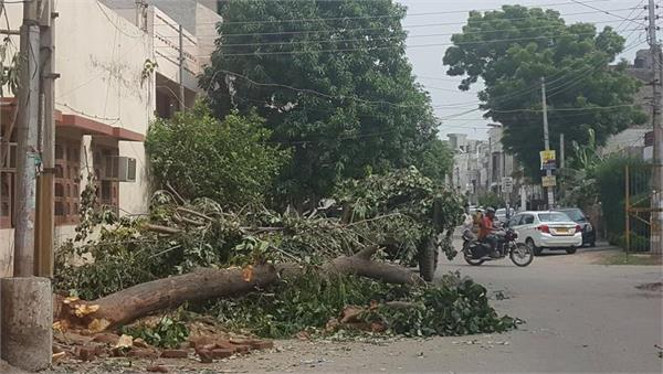 after the death of the young man corporation decide to remove unsafe tree