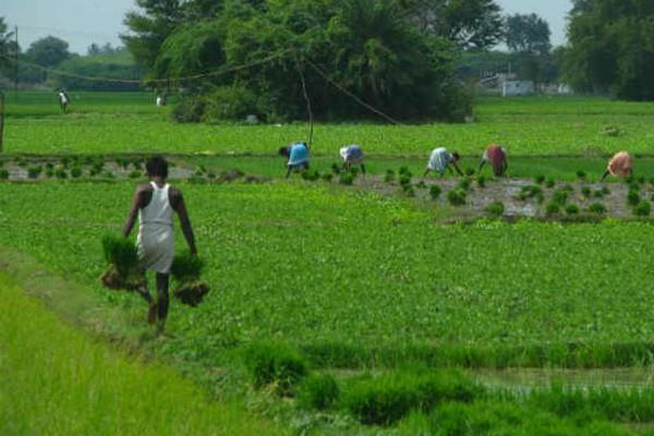 india agricultural growth rate declines in march quarter