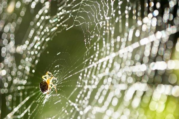 spider web fibers can be helpful in preventing cancer