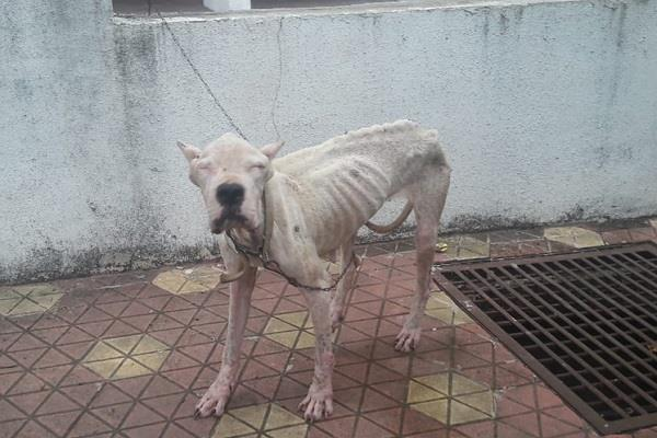 the condition of these dogs was series due to hunger