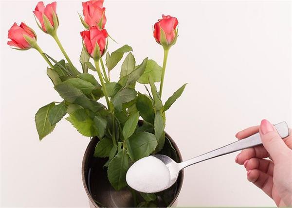 फूलों को लंबे समय तक फ्रैश रखने के लिए अपनाएं ये आसान ट्रिक्स