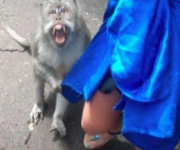 monkeys attacked on austrian tourists cristina returned without looking taj