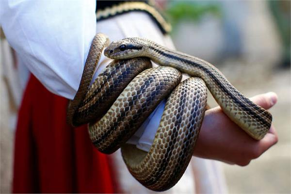 woman dies after snake bought online bites her
