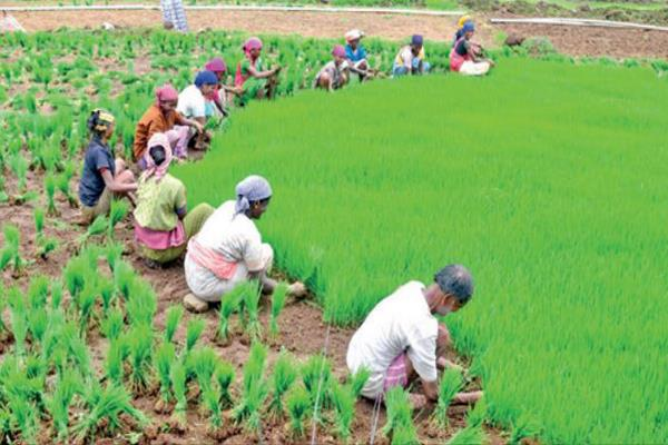 haryana farmers to get benefit of rs 6 000 18 000 per acre post msp hike