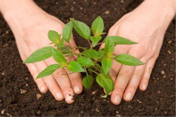 the target of planting 10 lakh saplings this time in the district