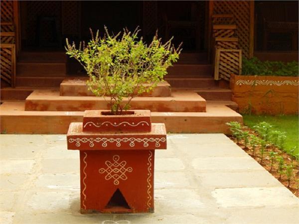 तुलसी का पौधा लगाते समय आपको पता होनी चाहिए ये 5 बातें