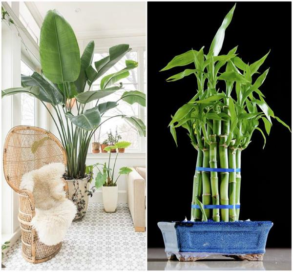 जीवन में चाहिए तरक्की तो घर में लगाएं ये 5 पौधे!