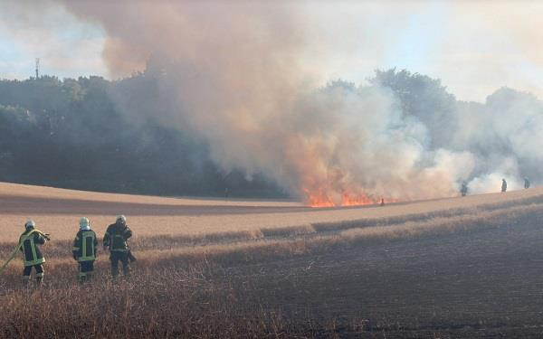 burning bird falls from wire torches 17 acres of land