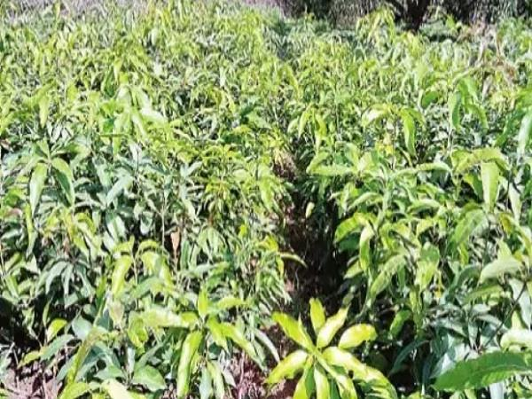 the garden department will give 40 thousand plants to the gardeners