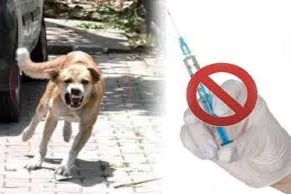 anti rabies injection not found in hospital
