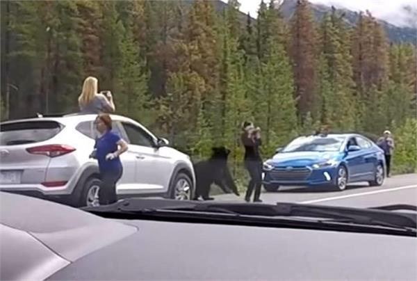 canada viral video of black bear and tourist