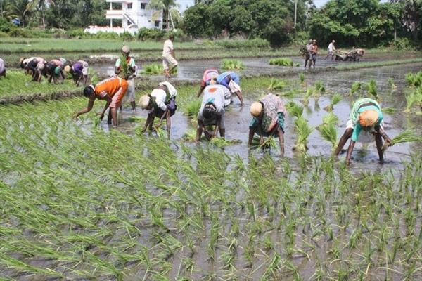 natural farming is not helpful in food production