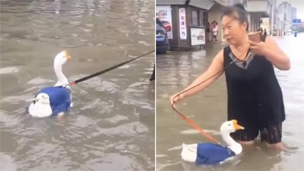 china women taking the duck for a walk after rainfall viral video
