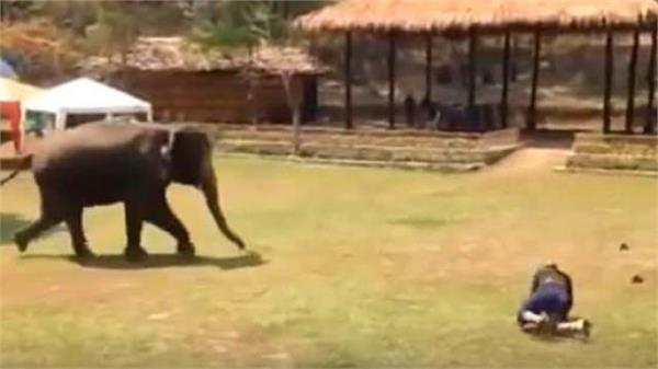 elephant saved some like this to his caretaker video happened viral