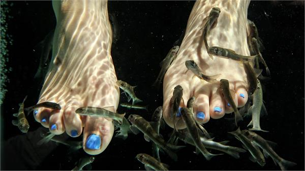 a woman in new york lost her toenails after fish pedicure