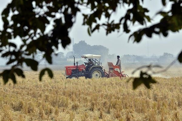 food production may remain higher than last year