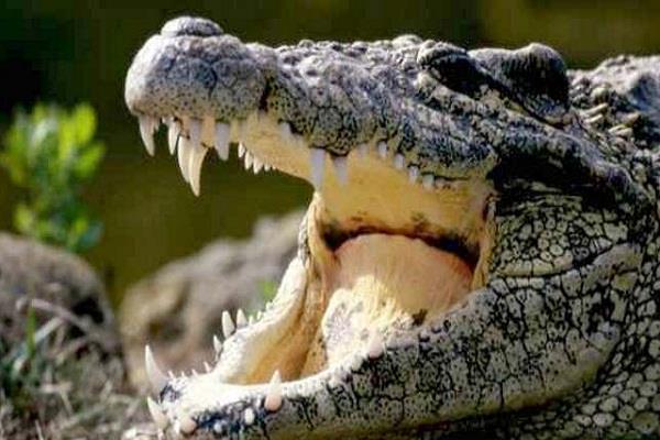 gujarat rain crocodile forest department
