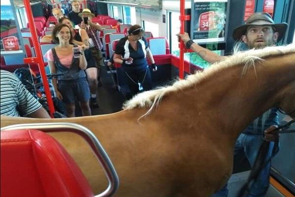 austrian man tries to take horse on a train pics are viral
