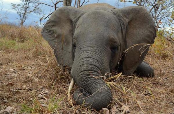 hundreds of species at risk of extinction due to deforestation