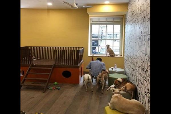 tata group door open for stray dogs