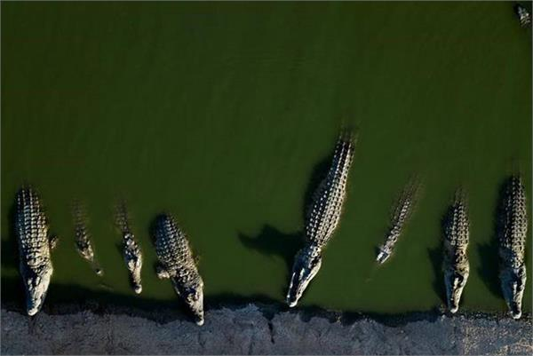 passengers flee into crocodile infested rainforest after  illegal  boat