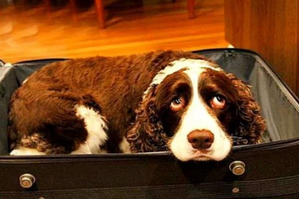 full of last wish of wife hospital carrying dogs in suitcases
