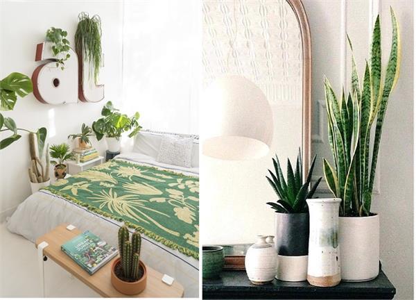 बैडरूम के माहौल को हमेशा Fresh रखेंगे ये 7 पौधे