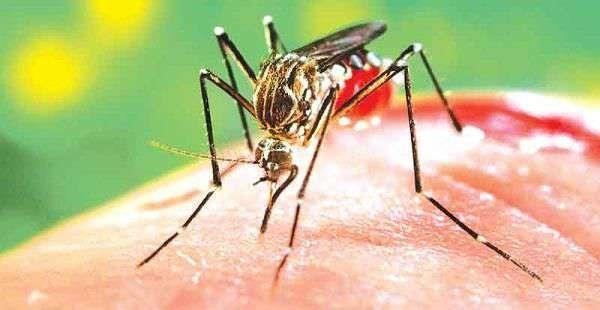 dengue larvae in 53 containers found during checking in hoshiarpur