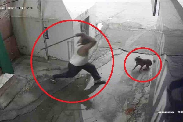 pregnant bitch killed by beating incidents captured in cctv