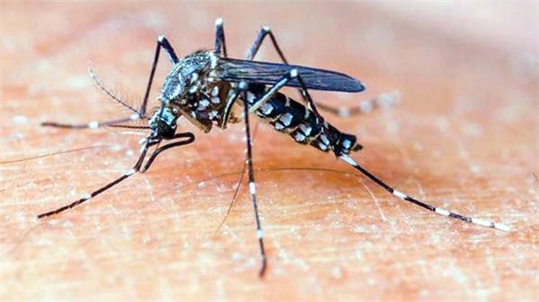 3 patients die from dengue