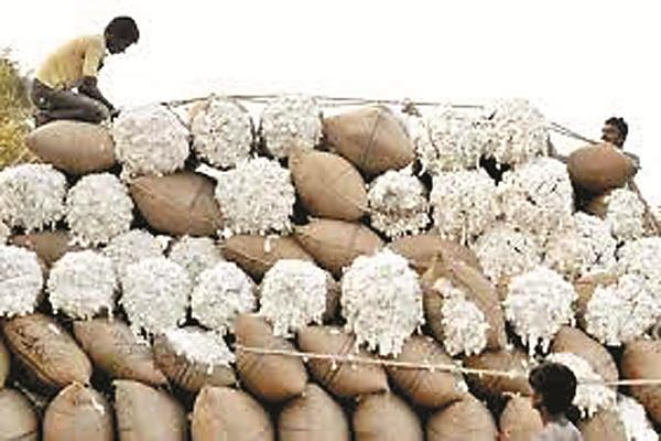 75 of cotton export contracted from china