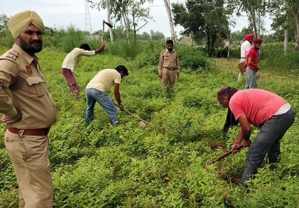 forest department removed illegal occupation