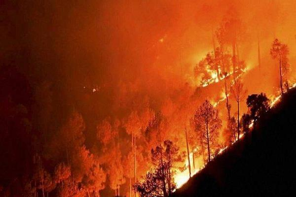 the government will reward the forest fire and plantation